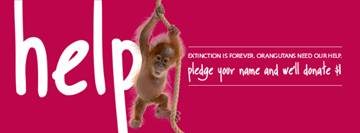 Trilogy's Save the Orangutans Campaign