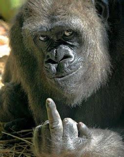 Swearing Gorilla