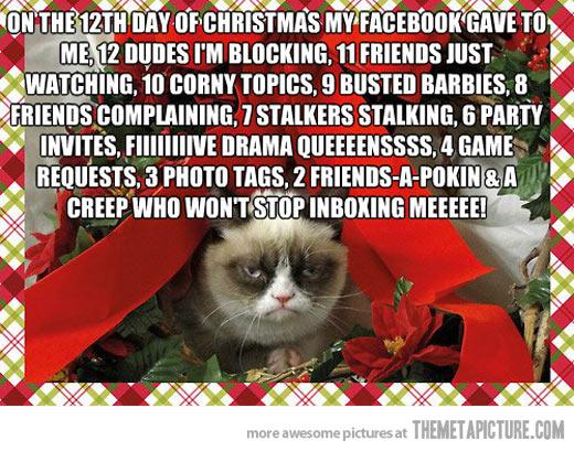funny-Christmas-cat-Santa-hat