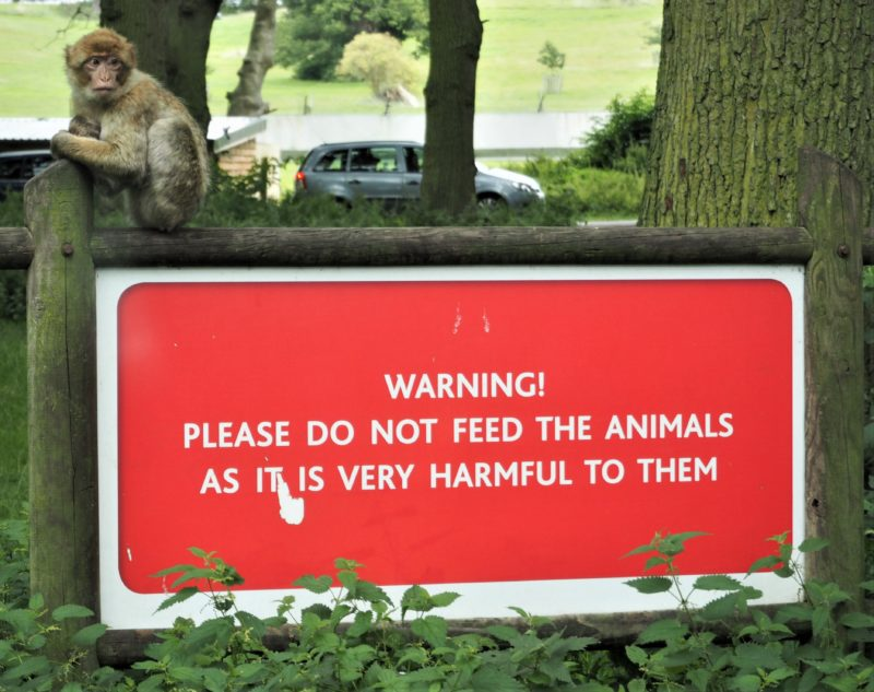 School Holiday Fun: Day Trip to Woburn Safari Park