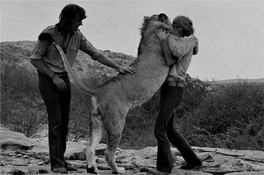 Christian Harrods Lion